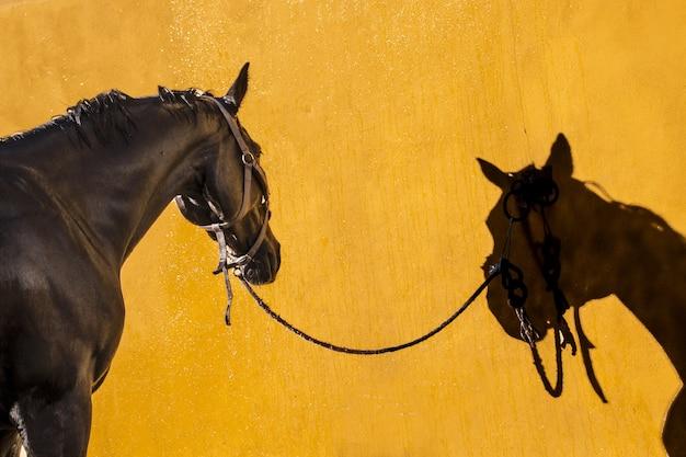 Bela foto de um garanhão marrom refletindo sobre um fundo amarelo