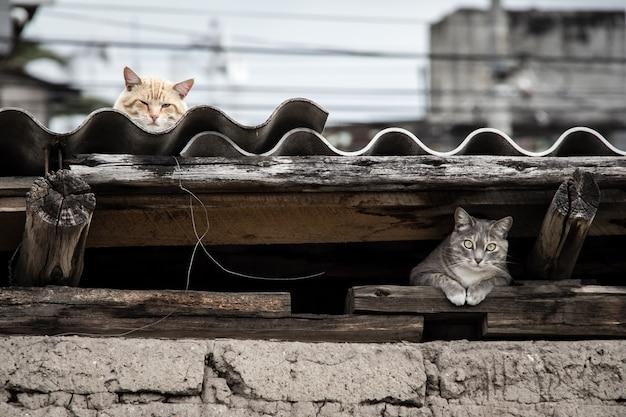 Bela foto de um gato cinza se escondendo sob o telhado enquanto o outro gato descansando no topo