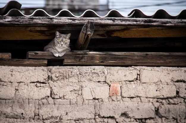 Bela foto de um gato escondido sob o telhado
