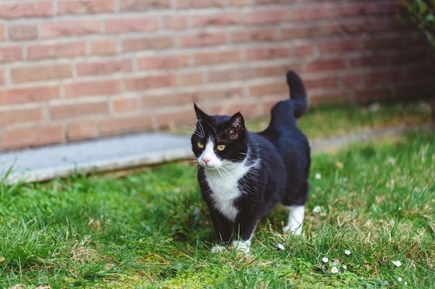 Bela foto de um gato preto fofo na grama em frente a uma parede de tijolos vermelhos