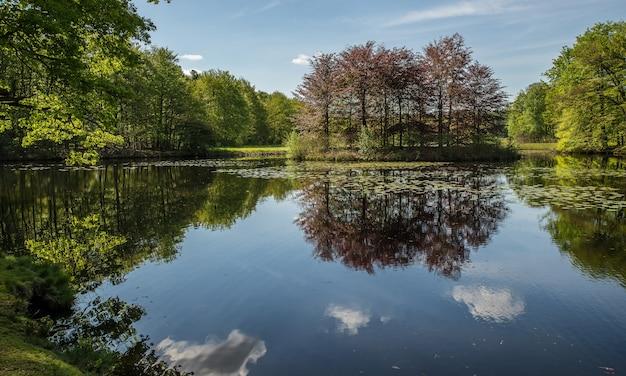 Bela foto de um lago cercado por árvores verdes sob um céu azul