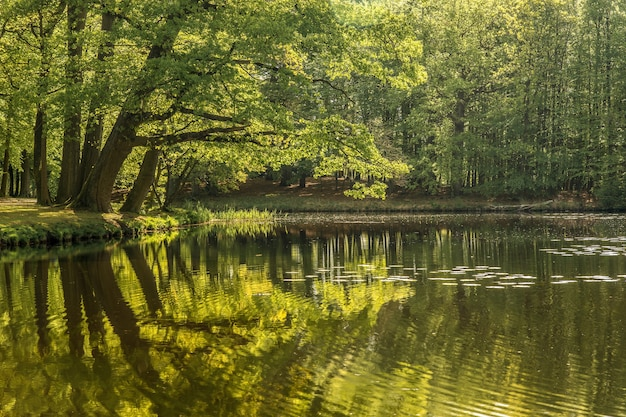 Bela foto de um lago cercado por árvores verdes