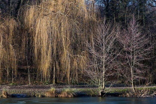 Bela foto de um lago com árvores no maksimir forest park em zagreb, croácia, durante o dia
