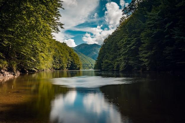 Bela foto de um lago em uma floresta durante um dia ensolarado