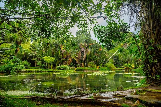 Bela foto de um lago no meio de uma floresta