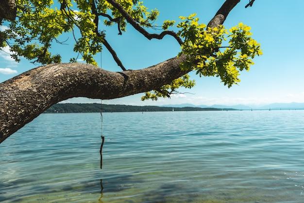 Bela foto de um mar azul calmo com uma árvore acima dele sob um céu azul