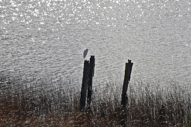 Bela foto de um pássaro à beira-mar ao pôr do sol