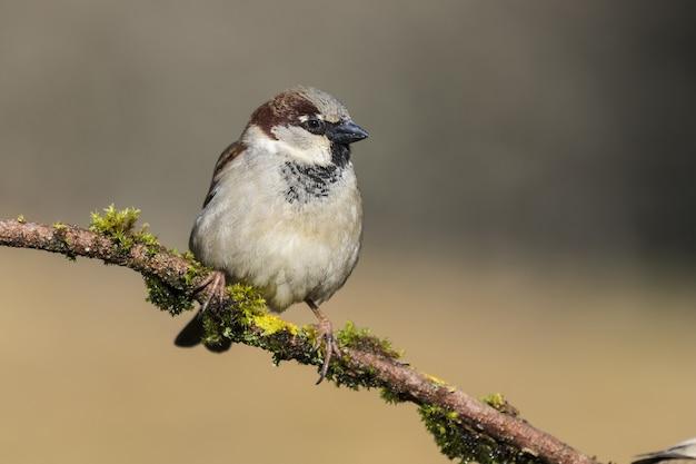 Bela foto de um pássaro pardal no galho de uma árvore na floresta