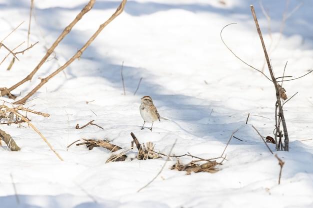 Bela foto de um pássaro pardal parado em um solo coberto de neve durante o inverno