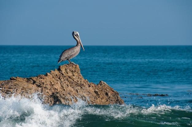 Bela foto de um pelicano cinza descansando em uma rocha com as ondas do mar batendo na rocha