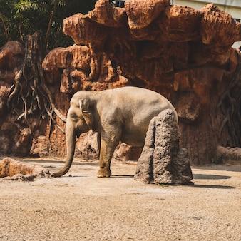 Bela foto de um pequeno elefante fofo sob a luz do sol