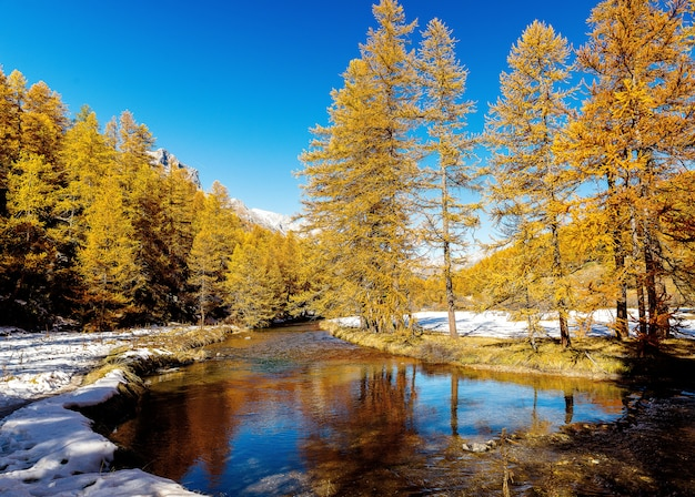 Bela foto de um pequeno rio que flui através de uma floresta de neve com pinheiros durante o dia
