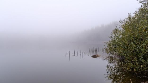 Bela foto de um píer de madeira refletida no mar, rodeado por árvores cobertas de nevoeiro