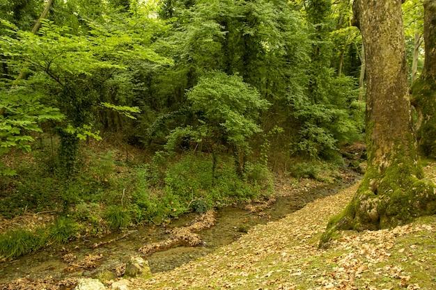 Bela foto de um riacho fluindo por uma floresta densa