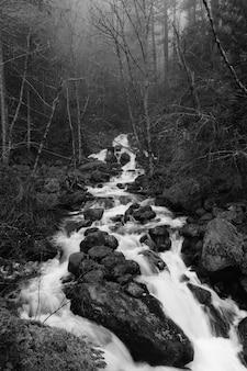 Bela foto de um rio em uma floresta em um terreno rochoso