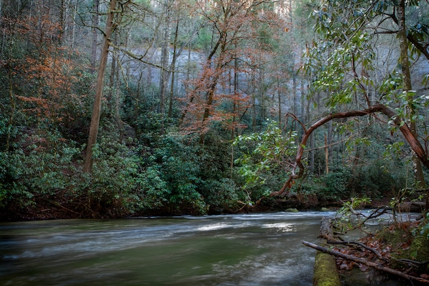 Bela foto de um rio no meio de uma floresta