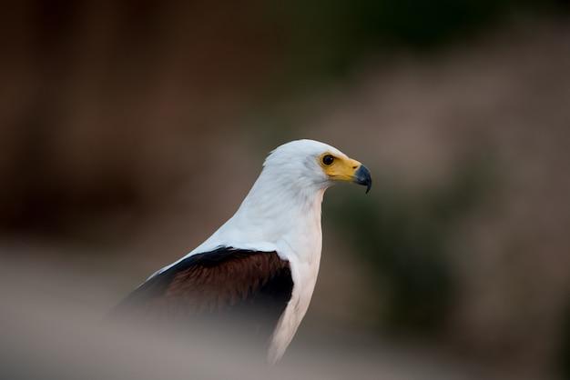 Bela foto de uma águia