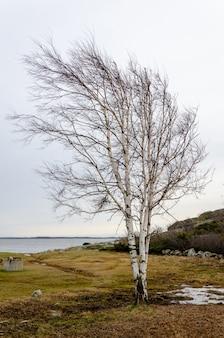 Bela foto de uma árvore com galhos nus e o lago ao fundo