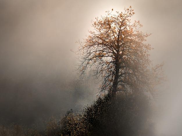 Bela foto de uma árvore de folhas amarelas, rodeada de nevoeiro