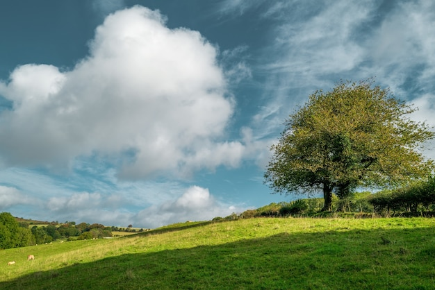 Bela foto de uma árvore em pé no meio de um campo verde sob o céu nublado durante o dia