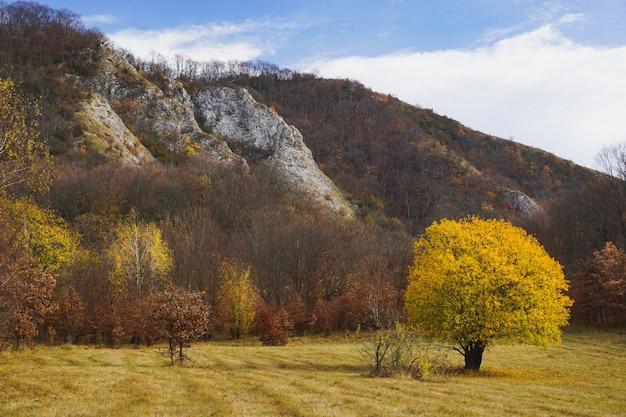 Bela foto de uma árvore solitária com folhas amarelas em um campo cercado por colinas