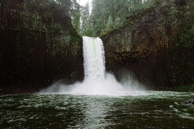 Bela foto de uma cachoeira na floresta cercada por árvores altas