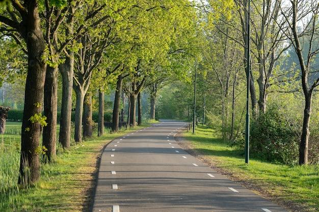 Bela foto de uma estrada cercada de árvores verdes
