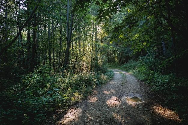 Bela foto de uma estrada na floresta cercada por vegetação