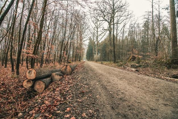 Bela foto de uma estrada na floresta com um céu sombrio
