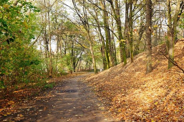 Bela foto de uma estrada na floresta durante o dia