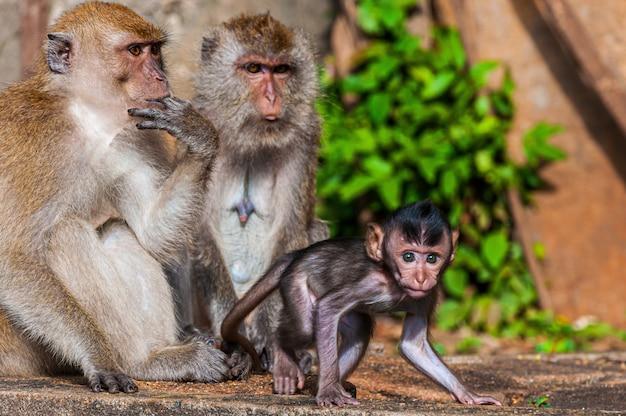 Bela foto de uma família de macacos com mãe, pai e bebê macacos