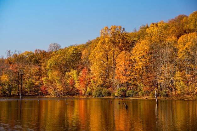 Bela foto de uma floresta ao lado de um lago e o reflexo de árvores coloridas de outono na água