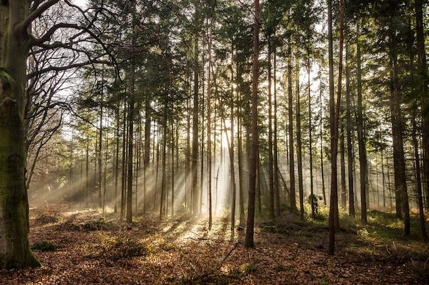 Bela foto de uma floresta com árvores verdes altas durante o dia