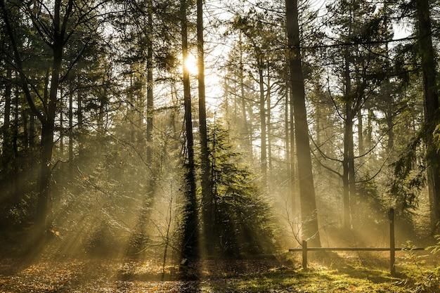 Bela foto de uma floresta com árvores verdes e o sol brilhando entre os galhos