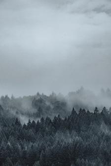 Bela foto de uma floresta misteriosa enevoada e nebulosa