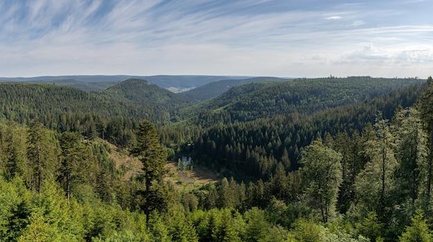 Bela foto de uma floresta negra, alemanha