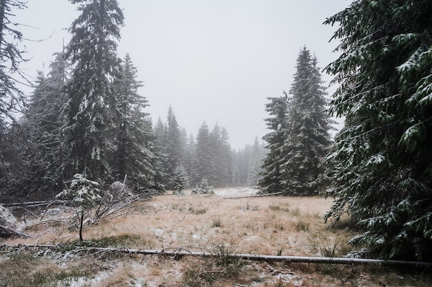 Bela foto de uma floresta nublada de inverno