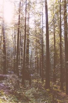 Bela foto de uma floresta