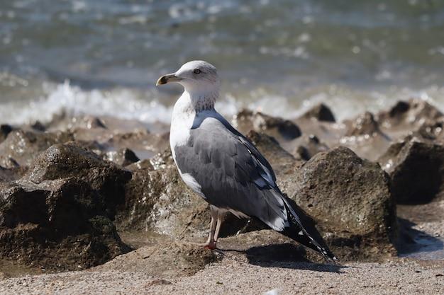 Bela foto de uma gaivota em uma costa rochosa sob a luz do sol