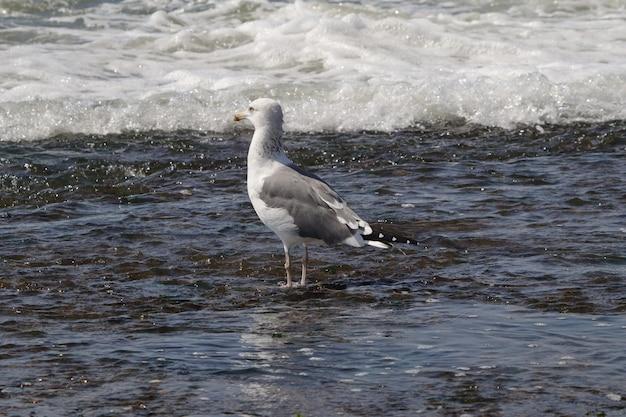 Bela foto de uma gaivota solitária na água do mar