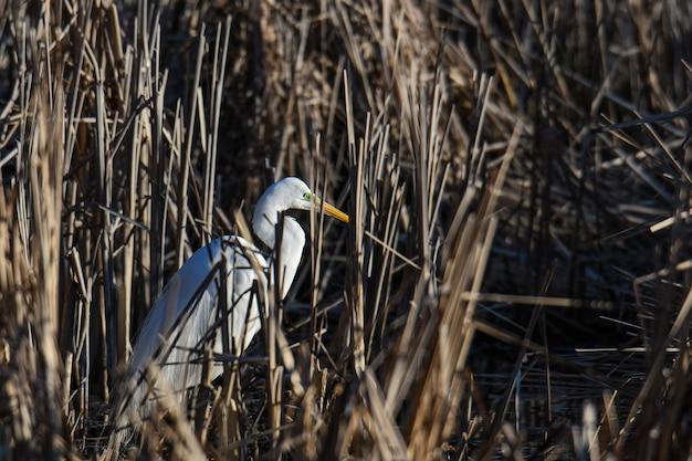 Bela foto de uma garça-branca perto de um lago cheio de grama