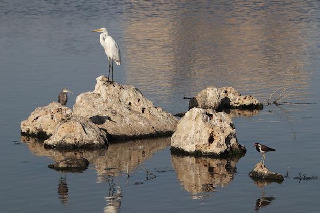Bela foto de uma garça, garça e gaivota empoleirando-se na rocha