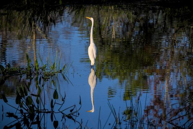 Bela foto de uma garça parada na água