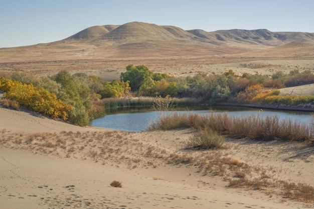 Bela foto de uma lagoa cercada por árvores verdes e amarelas no meio de um deserto