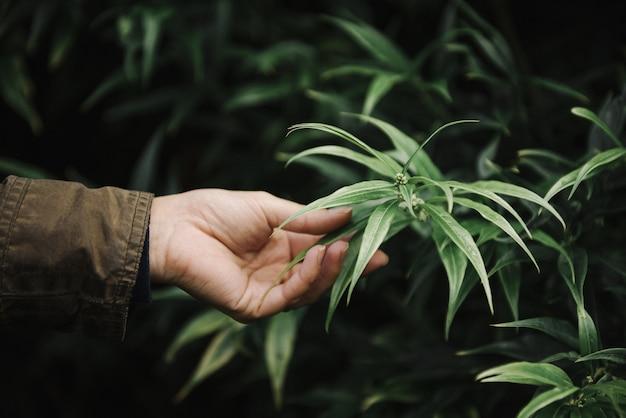 Bela foto de uma mão feminina segurando uma folha verde contra uma folhagem
