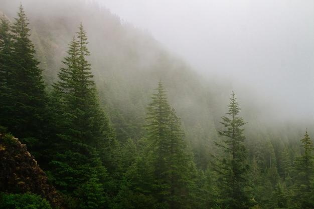 Bela foto de uma montanha arborizada no meio do nevoeiro