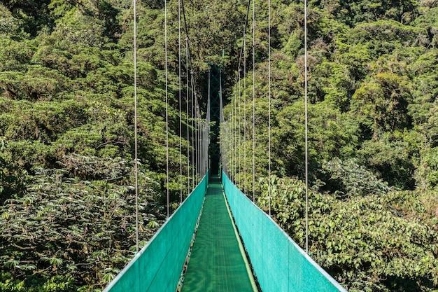Bela foto de uma passarela verde de uma ponte suspensa com floresta verde