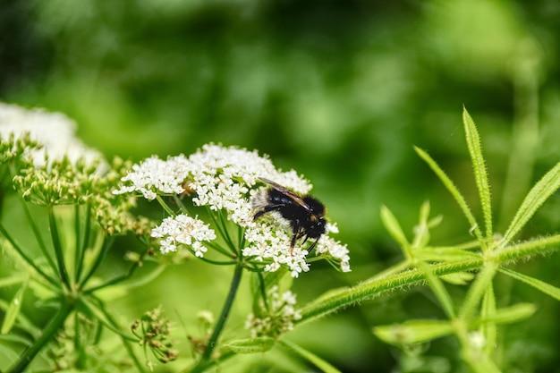 Bela foto de uma planta com pequenas flores brancas e um inseto nela