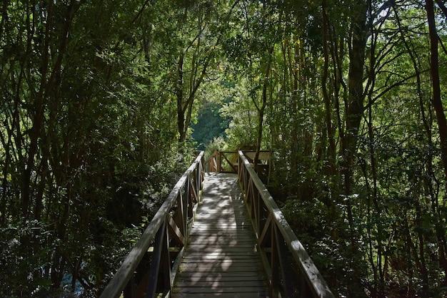 Bela foto de uma ponte de pedestres de madeira cercada por árvores no parque