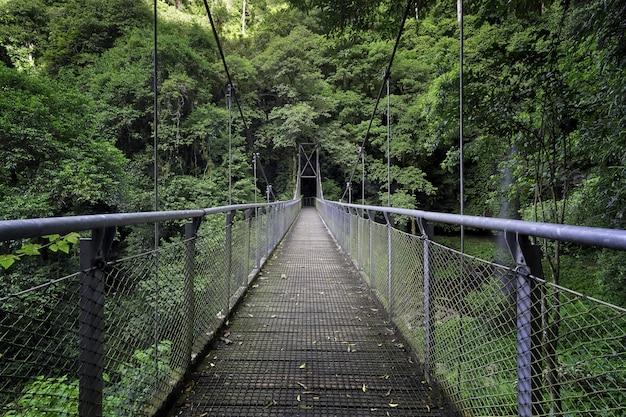 Bela foto de uma ponte no meio de uma floresta cercada por árvores e plantas verdes